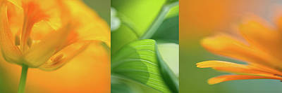 Orange Collage Art Print
