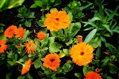 Photograph - Orange Country Flowers - Series I by Doc Braham