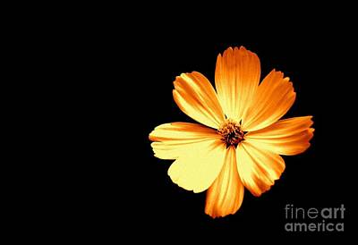 Photograph - Orange Cream Floral by Alex Blaha