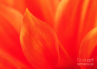 Orange Dahlia Abstract Art Print by Olivia Hardwicke