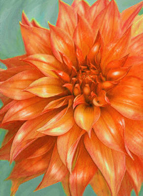 Orange Dahlia Art Print by Jane Schnetlage
