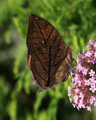 Butterflies Photograph - Orange Dead Leaf Butterfly Closed Wings by Rosanne Jordan