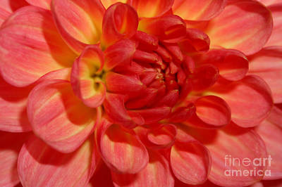 Photograph - Orange by Deena Otterstetter