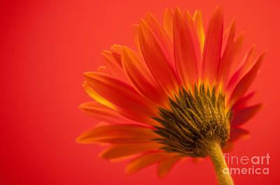 Photograph - Orange Delight by Bianca Nadeau