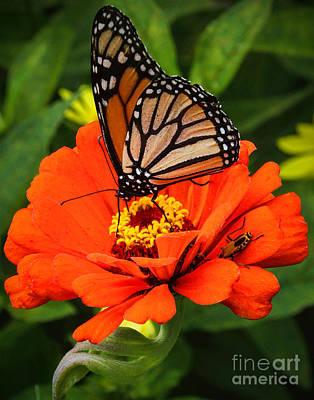 Photograph - Orange Delight by Elizabeth Winter
