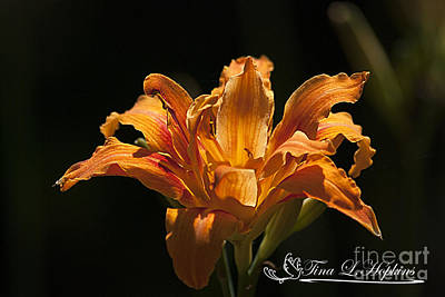 Photograph - Orange Double Day Lily 20120706_56a by Tina Hopkins