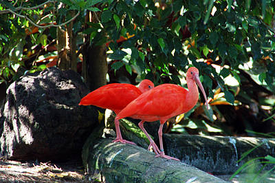 Photograph - Orange Feathered Friends by Aimee L Maher Photography and Art Visit ALMGallerydotcom