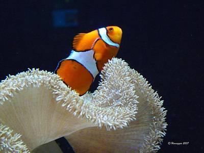 Photograph - Orange Fish And Sea Creature by Hemu Aggarwal