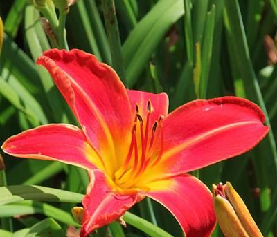 Photograph - Orange Flower by Bill Woodstock