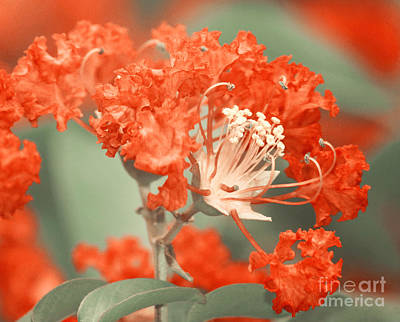 Photograph - Orange Flower Bow by Jackie Farnsworth