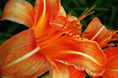 Giuseppe Cristiano Royalty Free Images - Orange Flower Royalty-Free Image by Christopher Hoffman