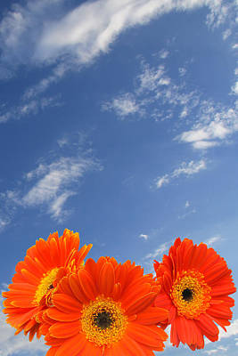 Photograph - Orange Flowers And Sky by Melinda Fawver