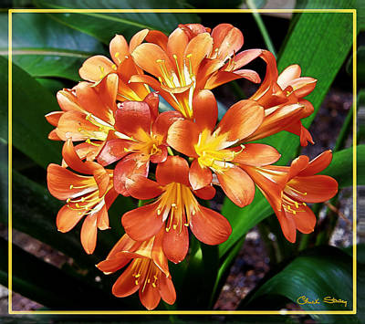 Photograph - Orange Flowers by Chuck Staley