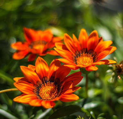Art Print featuring the photograph Orange Flowers by Jane Luxton