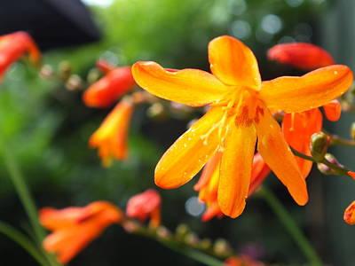 Orange Flowers Art Print by Jason Davies
