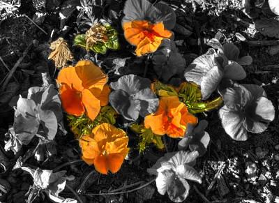 Owl Photograph - Orange Flowers by John Straton