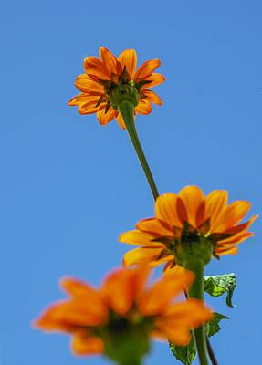 Orange Flowers On Blue Sky Art Print by Debbie Karnes
