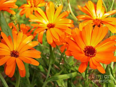 Impressionist Landscapes - Orange Flowers by Thomas R Fletcher