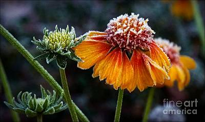 Photograph - Orange Frosty by Julia Hassett