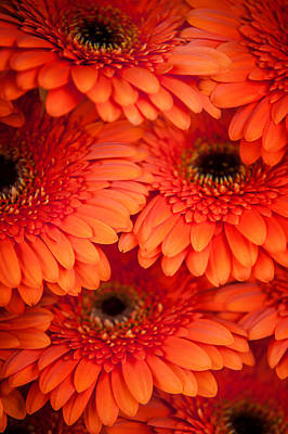 Photograph - Orange Gerbera 1. Amsterdam Flower Market by Jenny Rainbow