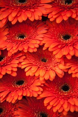Photograph - Orange Gerbera 2. Amsterdam Flower Market by Jenny Rainbow