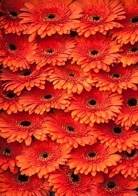 Photograph - Orange Gerbera. Amsterdam Flower Market by Jenny Rainbow
