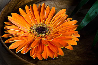 Orange Gerbera Original by Evgeni Ivanov