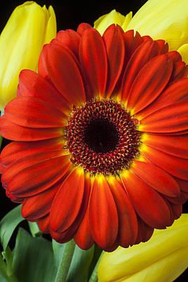 Gerbera Photograph - Orange Gerbera by Garry Gay