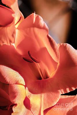 Orange Glad Glow Art Print by Robert Bales