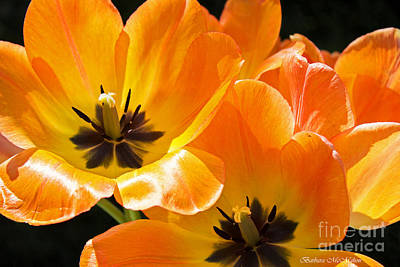 Flower Photograph - Orange Glow by Barbara McMahon