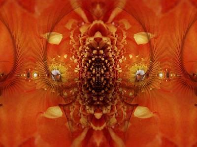 Digital Art - Orange Gold by Nancy Pauling