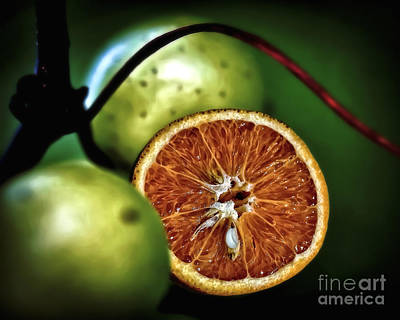 Photograph - Orange Grape by Walt Foegelle