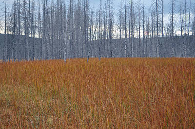 Orange Grasses And Gray Trees In Yellowstone National Park Art Print by Bruce Gourley