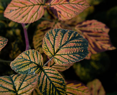 Photograph - Orange-green by Leif Sohlman