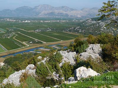 Photograph - Orange Groves Near Pizinovac - Croatia by Phil Banks