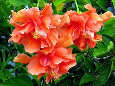 Hibiscus Photograph - Orange Hibiscus 3 by Zina Stromberg