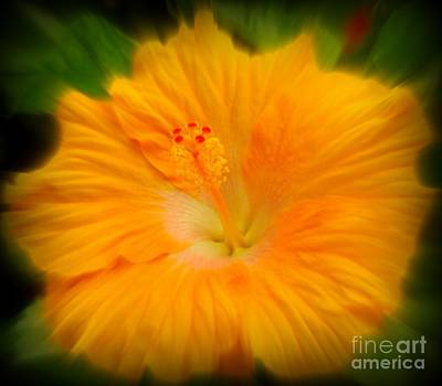 Art Print featuring the photograph Orange Hibiscus Flower by Clare Bevan