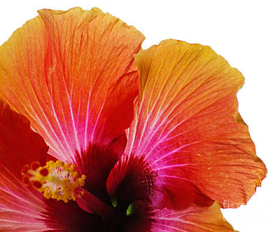 Photograph - Orange Hibiscus Flower by Sally Simon