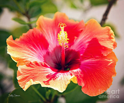 Photograph - Orange Hibiscus by Sally Simon