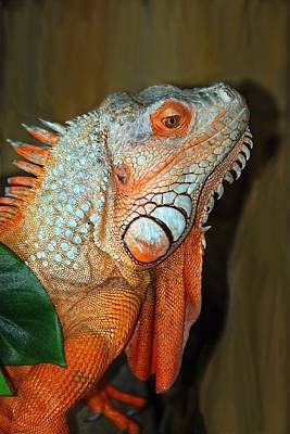 Photograph - Orange Iguana by Patrick Witz
