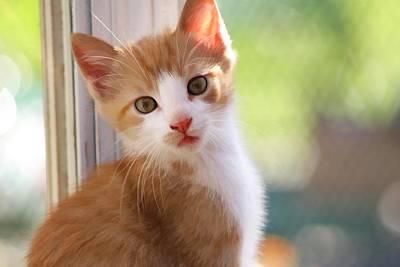 Digital Art - Orange Kitten by Audreen Gieger