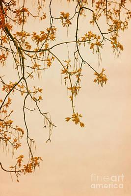 Orange Leaves Original