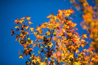 Orange Leaves Print by Mike Lee