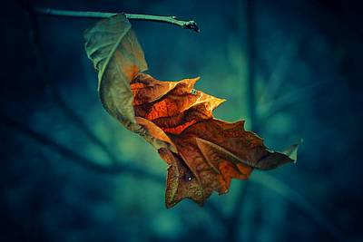 Photograph - Orange Left Hanging by Beth Akerman