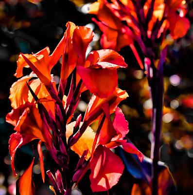 Photograph - Orange by Leif Sohlman