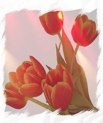 Tulips For The Home Photograph - Orange Light by Debra  Miller
