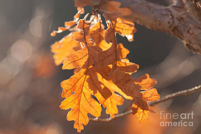 Photograph - Orange Light by Shawn Naranjo