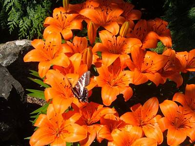 Photograph - Orange Lilies by Sharon Duguay