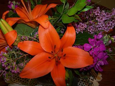 Oranage Photograph - Orange Lilly by Dianne Stopponi