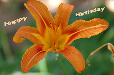 Photograph - Orange Lily Birthday 1 by Aimee L Maher Photography and Art Visit ALMGallerydotcom